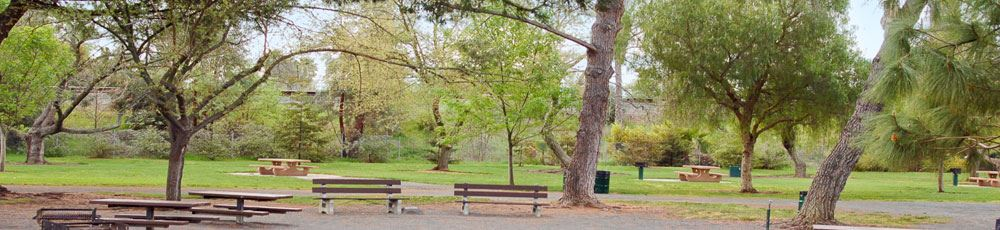 Benches, Picnic Tables, and Trees in a Park