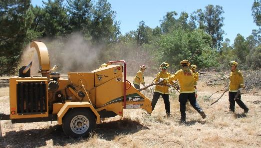 Fire crew removing brush
